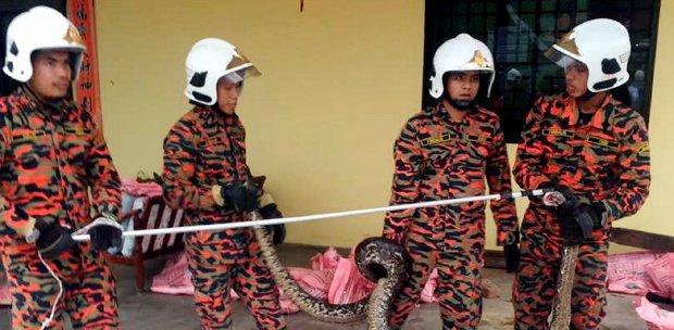 wildlife malaysia covid19 roaming streets empty animals lockdown
