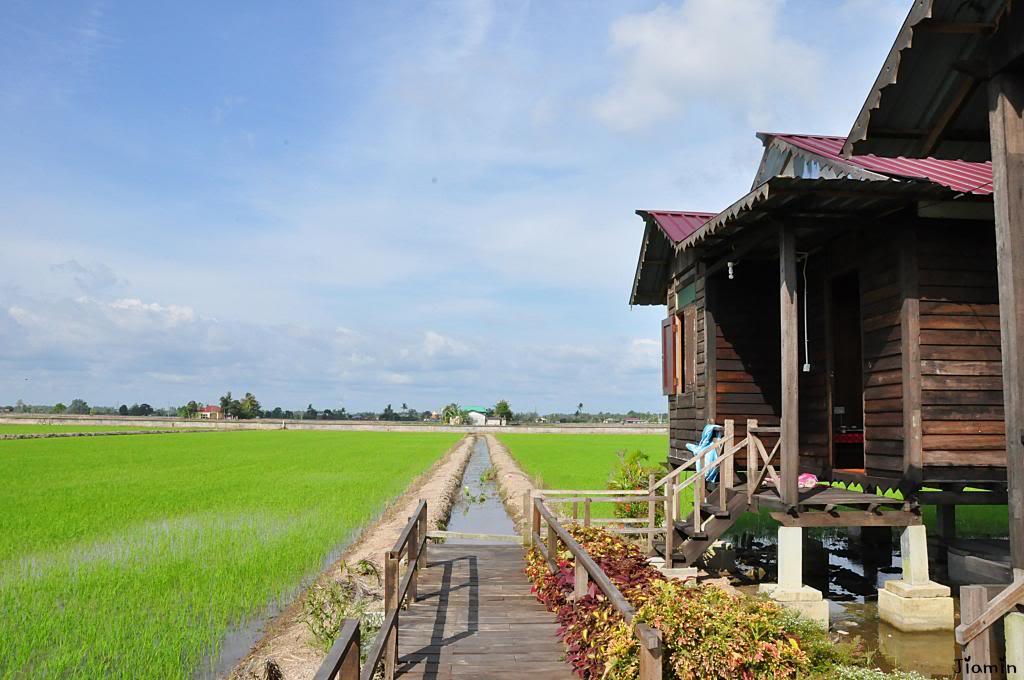 Homestay Kampung Sungai Haji Dorani 1