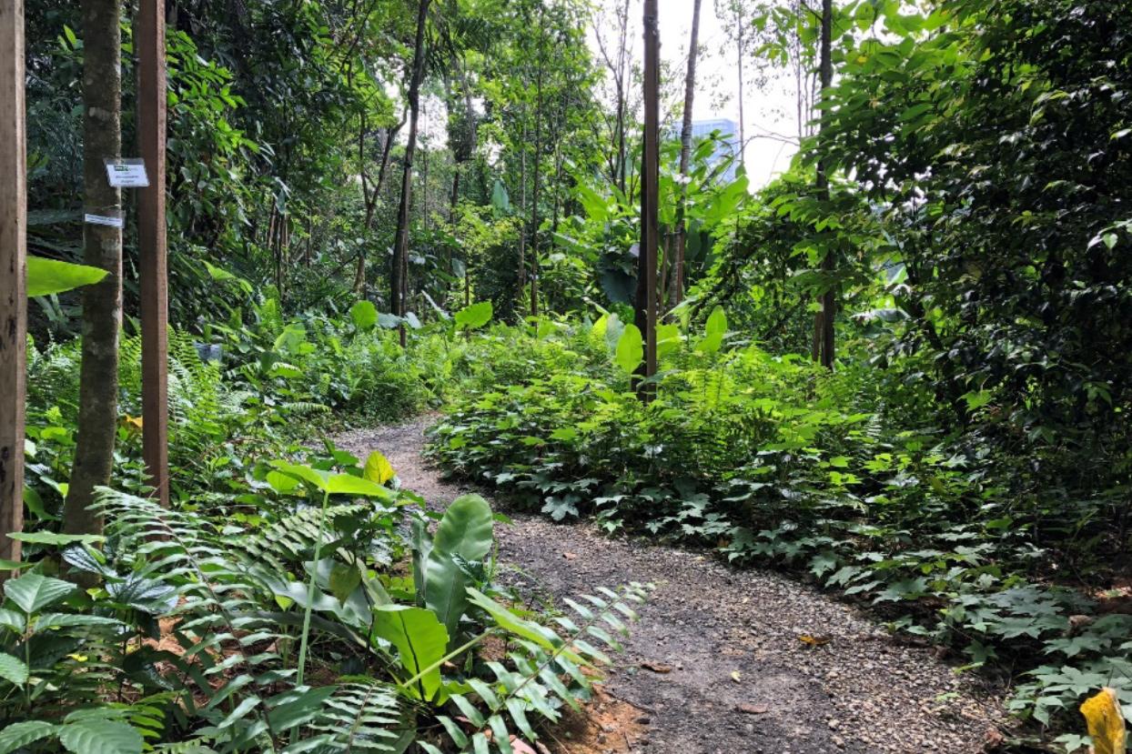 mco trekking hiking malaysia kl genting selangor